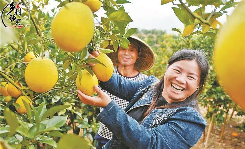 """福州这些村庄获评2020年度省级""""一村一品""""示范村!"""