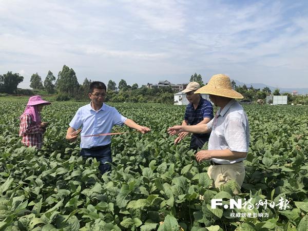 闽豆新品种连江示范片喜获丰产 农技专家建议全省推广