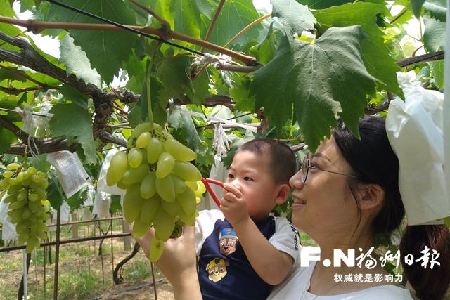 福州全力打造以马尾琅岐为中心的现代果蔬发展新格局